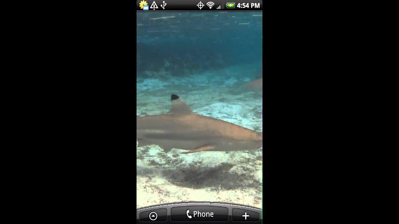 Top 5 Best Shark Week Apps & Games | Heavy com