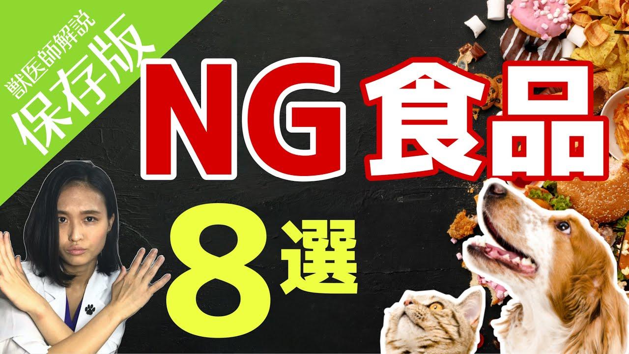 【保存版】意外な〇〇もNG⁈ 犬や猫にあげてはいけないもの8選!