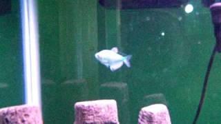 best 38 gallon aquarium set up on youtube