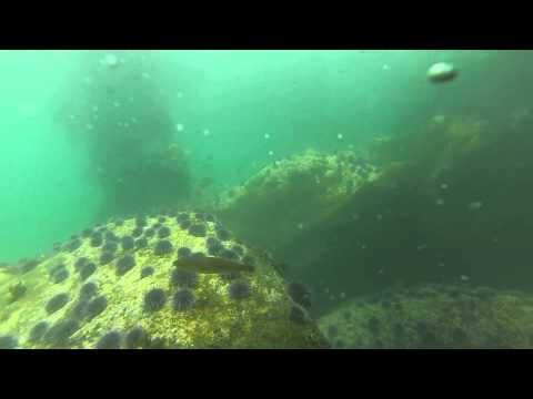 Long Beach Breakwall Dive