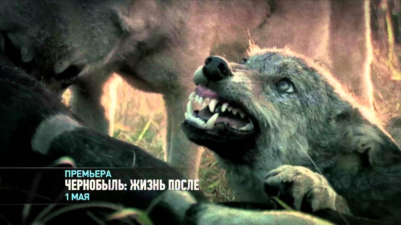 Discovery. Чернобыль: Жизнь после