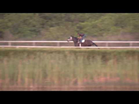 Always Dreaming Works at Palm Beach Downs for Kentucky Derby