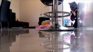 Dog Vs Cat - Staffy Diaries