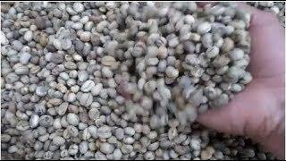Cà phê nhân Mo Culi