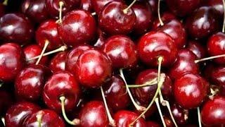 ابسط طريقة لزراعه الكرز من البذور في المنزل how to grow cherry at home