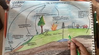 how to draw carbon cycle