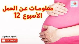 سلسلة معلومات عن الحمل (الأسبوع 12 من الحمل) HD