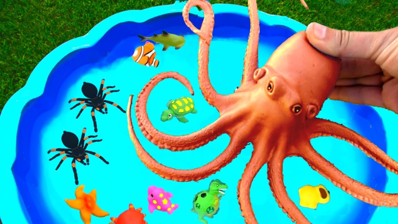 Wild Animals and Farm Animals into Pool for Kids - Learn Colors with Zoo Animals For Kids