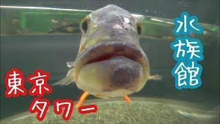 かわいい魚がたくさん。 珍しい魚もたくさん。 【撮影機材】 ・Panasoni...