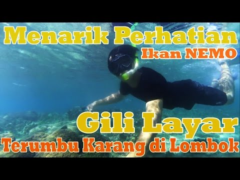 Best Coral Reefs Gili Layar in Lombok Full Snorkling Time (Ady's Daily Life in Lombok)