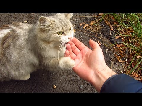 Fluffy cat purrs after eating food