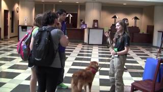 Canyon The Therapy Dog: James E. Walker Library, September 29, 2014