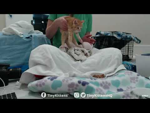 Intake exams with new feral pregnant cat and kittens!   TinyKittens.com