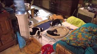 Hurricanes not ready for bed yet 1055pm Maggie 10232017 thumbnail