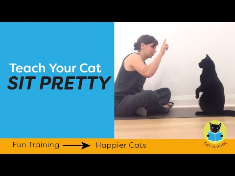 Clicker Train Your Cat To Balance On Their Back Paws