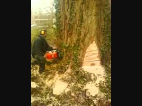 abattage arbre 31