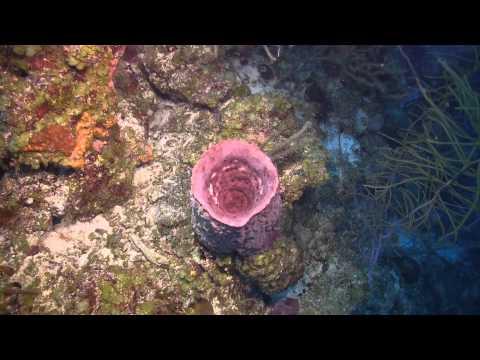 Belize Scuba Dive