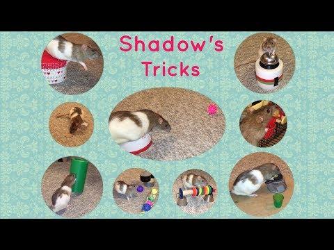 Shadow The Rat's Amazing Tricks Part 4