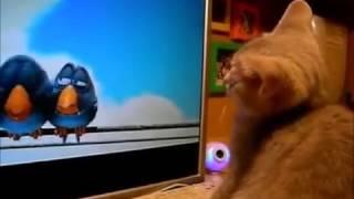 Кошки - это кошки!