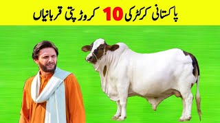 10 Most Expensive Bull Of Pakistani Cricketers | Pro Tv