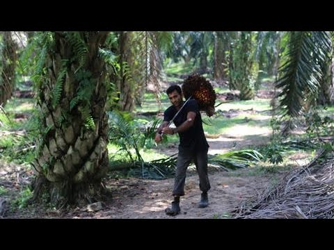Alleged Worker Abuse at Malaysian Palm-Oil Plantations