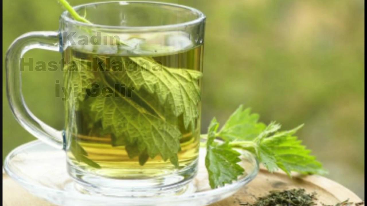 Isırgan Otu Çayı Faydaları Nedir Nasıl Yapılır