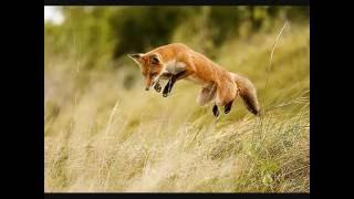 manau le loup le renard et la belette