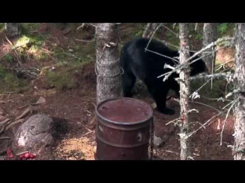 Nova Scotia Black Bear Bow Hunt, 2013