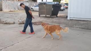 Off leash training your dog / BFF Canine Obedience / Cincinnati, OH