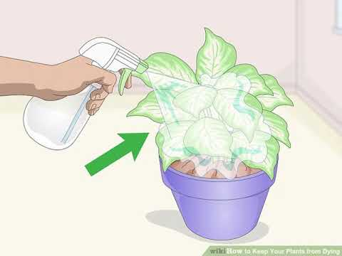How to Keep Your Plants from Dying