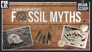 Fossil Myths: Cyclopes, Griffins, & Magic Fairy Bread