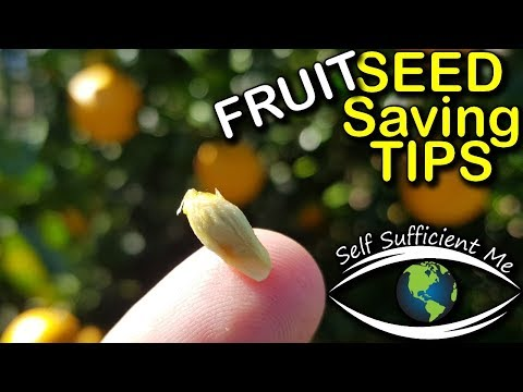 Seed Saving Tips Episode 3 – Fruit Tree Seed | Organic Gardening