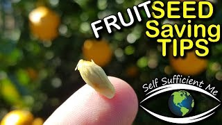 Seed Saving Tips Ep 3 - Fruit Tree Seed | Organic Gardening