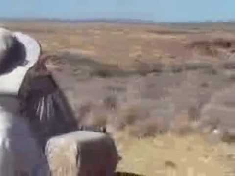 How To Sage Grouse Hunt In Nevada, Bagged Limit Sept 25,  2010
