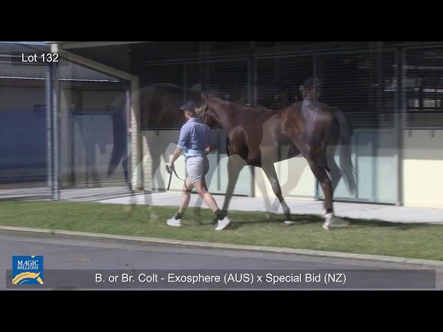 Lot132 Colt - Exosphere X Special Bid (NZ) (Hand Walk)