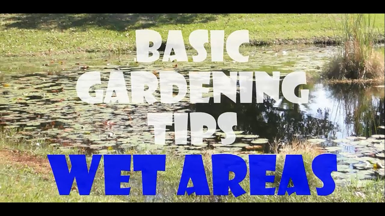 BASIC GARDENING TIPS WET AREAS YouTube