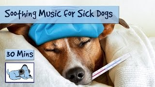 This music will help to calm down your poorly dog, but we must stat...