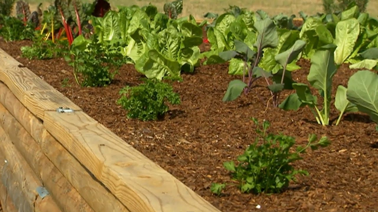How to Get Started with Raised Garden Beds | P. Allen Smith Classics ...
