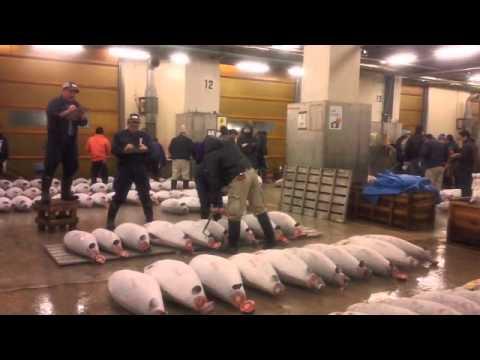 Lelang Ikan di Pasar Tsukiji, Tokyo - Tuna Auction Tokyo