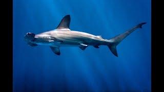 A Shark Week Montage Of Sharky Sharks