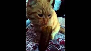 Кошачьи прихоти