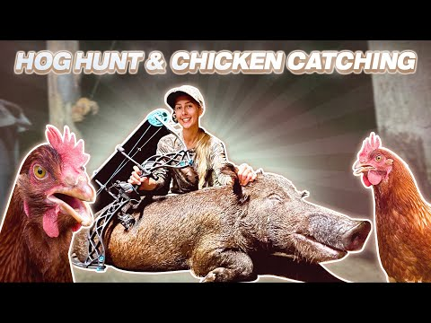 Bow Hunting BIGGEST Sow Hog & Hand Catching a Wild CHICKEN!