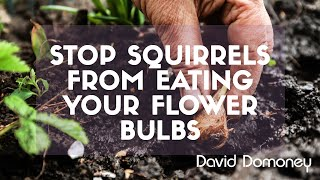 David Domoney's Gardening Quick Tips