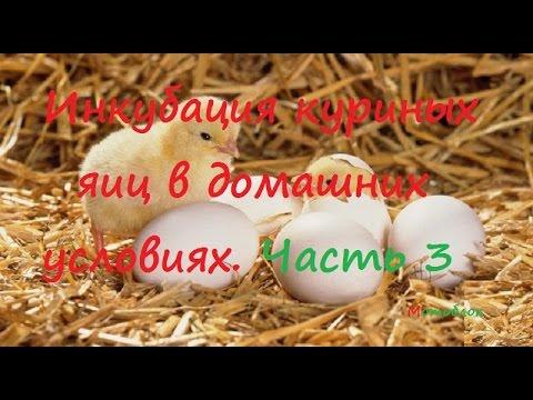 Как проверить свежесть яиц. Определение свежести куриных яиц в .