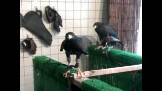 falconers cafe in mitaka tokyo