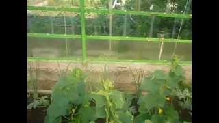 видео Вегетация