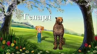 Учим диких животных - Гепард - развивающие мультфильмы для детей про животных в стихах