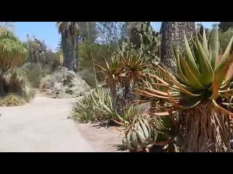 Huntington: The Biggest Cactus And Succulent Collection In The World