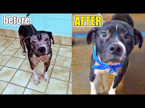 FRIENDLY ABANDONED DOG RESCUED after Empty The Shelters (1 of 2)