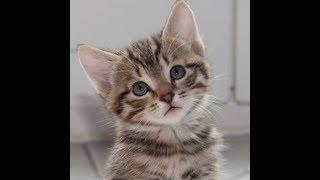Лучшие приколы про котиков | Подборка смешных кошек и котят #6